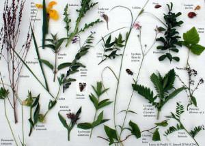 Réalisation d'un herbier
