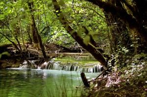 Messigny-et-Vantoux – La découverte de nos forêts