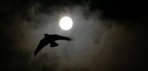 Jeux – La Nocturne – Soirée à thèmes