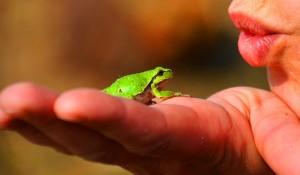 Auxonne – Promenons-nous dans les bois… à la découverte des amphibiens