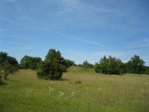 À la découverte des pelouses calcaires – Épagny et Savigny-le-Sec