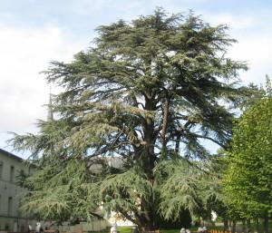 Conférence «Le parc de La Chartreuse : un patrimoine naturel remarquable»