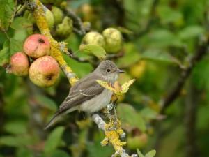 Week-end national de comptage des oiseaux de jardins en hiver