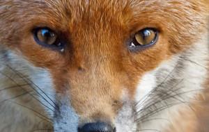 Talant – Réunion naturaliste : et si on découvrait les mammifères ?