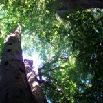 Spectacle – «À l'ombre de nos arbres»