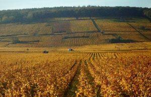Exposition plein-air – La vigne et la ville / Le Dijonnais : territoire viticole