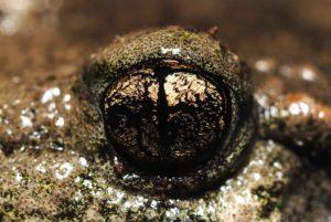 Sortie nature – Découverte des amphibiens en forêt de Cîteaux