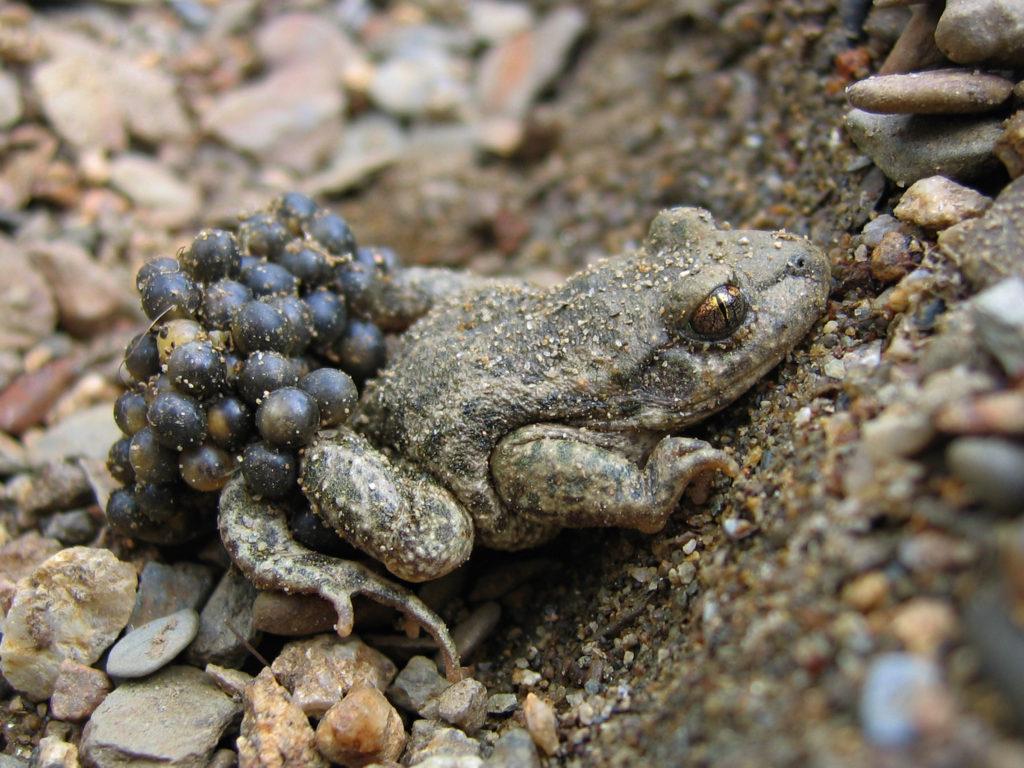 Couternon De – Soirée Prospection Amphibiens 9EH2IYWD