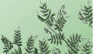Exposition de plein air – Légumineuses : des graines aux grands atouts !