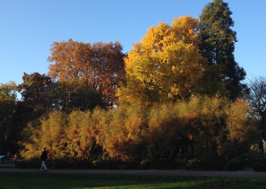 jardin-de-larquebuse arbres-c-jondi