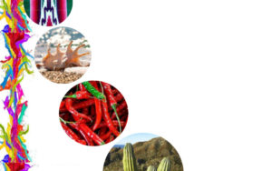 «Palettes aux couleurs mexicaines»