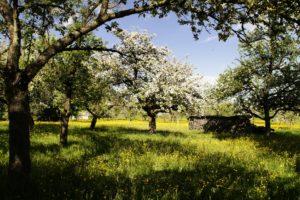 Longvic – Découverte du verger conservatoire du Clos des Carmélites