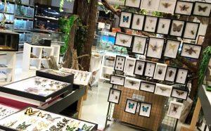 Expo-vente : le Franc curieux