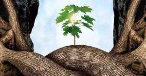 Projection-débat : «L'intelligence des arbres»
