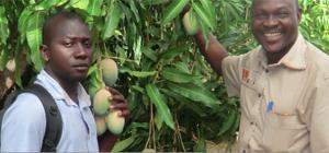 Les coulisses de la mangue bio et équitable
