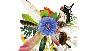 Fête de la nature et de la biodiversité