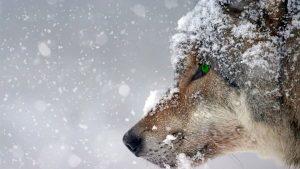 Jeux – Soirée Loup-Garou
