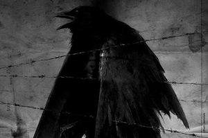 Soirée dark