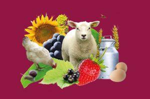 Fête de l'agriculture place Darcy – ANNULÉE