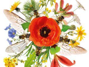 APIdays – Fête des abeilles