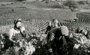 Cinéma – «Vignes, passion et découvertes»