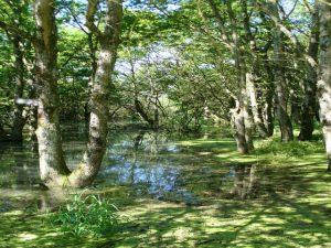Sortie naturaliste au lac du Der-Chantecoq