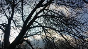 Sortie reconnaissance des arbres et arbustes en hiver
