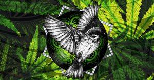 Soirée roots – Nakama