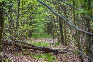 Saint-Seine-l'Abbaye – Exposition – La découverte de nos forêts