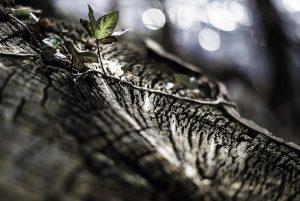 Conférence – Quels fondements pour un droit de la nature ?