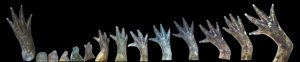 Conférence – Formation et identité de la main
