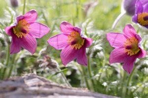 Prenois – Balade nature « Les premiers signes du printemps » (faune et flore)