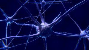 Pint of Science – La magie des cellules