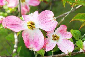 Foire aux plantes rares de Bézouotte