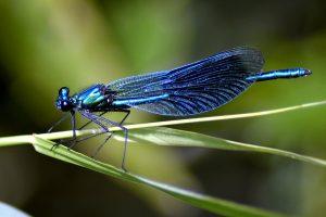 Sortie entomologie et botanique dans le marais de Rosière