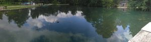 Beaune – Sortie chants d'oiseaux au parc de la Bouzaize