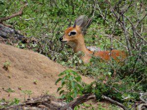 Conférence sur le Parc Kruger
