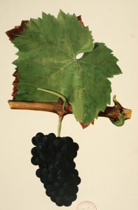 Exposition – Paroles vigneronnes