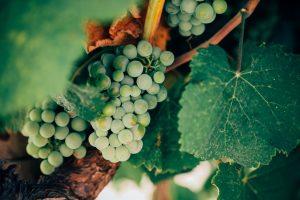 Dégustation de vins au naturel