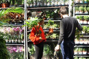 Grande vente de plantes ANNULE