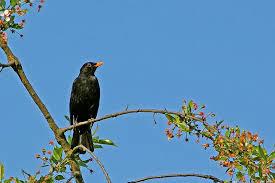 Conférence : Nouvelle classification des oiseaux