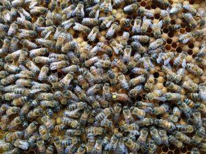 Soirée miel et abeilles !