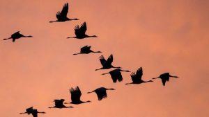 EuroBirdwatch : découverte des oiseaux migrateurs au plateau de la Cras