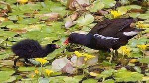Permanence «oiseaux hivernants» au lac Kir