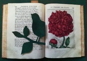 La nature à fleur de pages