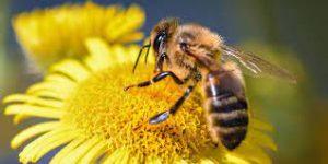 Ciné-débat : «Être avec les abeilles»